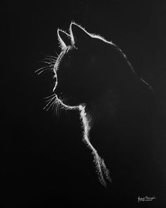 Very cool to do with scratch art, but then I realize there would be nothing but . , , Very cool to do with scratch art, but then I realize there would be nothing but . Beautiful Cats, Animals Beautiful, Kratz Kunst, Animals And Pets, Cute Animals, Black Paper Drawing, Scratch Art, Black And White Painting, White On Black Art