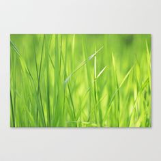 Green Gras Dream Stretched Canvas by Tanja Riedel - $85.00