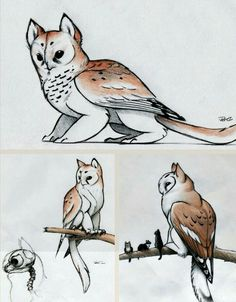 17 ideas for drawing cute animals sketches design reference Mythical Creatures Art, Mythological Creatures, Magical Creatures, Cute Fantasy Creatures, Mystical Creatures Drawings, Creature Drawings, Animal Drawings, Wolf Drawings, Dragon Drawings