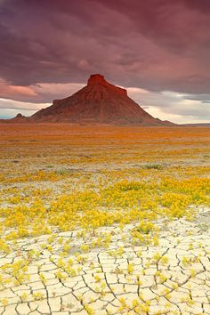 When Conditions Are Right, These Utah Deserts Explode With Colourful Flowers - Image credits: Guy Tal