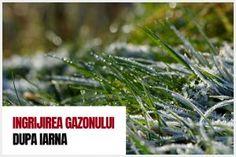 Stropirea corecta a pomilor fructiferi How To Dry Basil, Herbs, Mai, Blog, Lawn, Plant, Herb, Spice