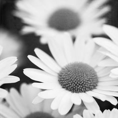 White Daisy Photo Modern Floral Art Gray by #PaulaGoffPhotography #integritytt