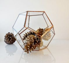 Geometric Glass Terrarium Dodecahedron Handmade by jacquiesummer