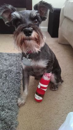 Pet insurance helps give a military family's pup a leg up on her recovery. Read Bailey's story here: https://www.facebook.com/photo.php?fbid=10151605231560718&l=be7ce3758a