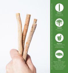 Jak używać szczoteczki Miswak
