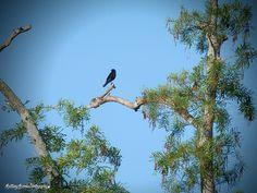Blackbird Circle B 3.21.15