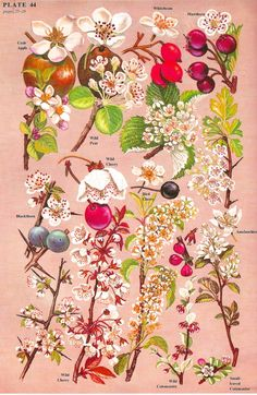 Vintage Fruits & Berries Botanical
