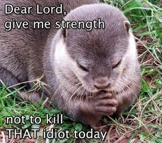 Dear Lord, give me strength not to kill that idiot - Funny otter looks like praying.