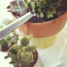 Baby cactus care.