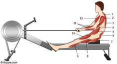 The Benefits of Rowing Machine Prove Why it's the Ultimate Workout - Fitness Vigil Home Rowing Machine, Pilates Machine, Rowing Machines, Workout Machines, Rower Workout, Gym Workouts, Fitness Facts, Fitness Diet, Row Machine Benefits