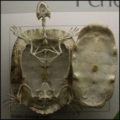 Skeleton, Milan Natural History Museum, Italy 2008, © Incognita Nom de Plume