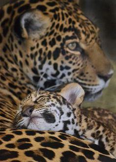 du tableau animal moms and kids