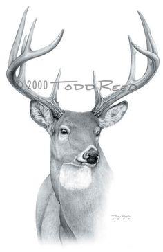 (Whitetail Deer) Dream Buck Graphite on paper - image size Nature Paintings, Deer Paintings, Deer Head Tattoo, Deer Drawing, Pencil Drawings Of Animals, Deer Pictures, Deer Art, Animals Images, Picture On Wood