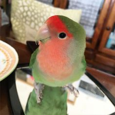 鏡に映る自分がだいすき笑   #インコ #インコ部 #鳥 #小鳥 #kotori  #コザクラインコ #kozakura #bird #birds  #pet #petbird #parrot #peachfacelovebird  #petsofinstagram #love #lovebird  #ふわもこ部 #ふわもこ #フワモコ部#ふわふわ #もふもふ #もこもこ #fluffy by kag0624 http://www.australiaunwrapped.com/