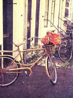 Rustic Autumn Decor, Bicycle with Orange Tulips in Amsterdam, The Netherlands