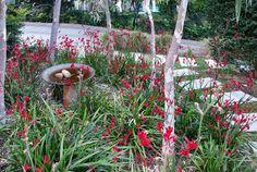 Backyard Landscaping Requirements Backyard Landscape Design Ideas On A Budget Backyard Plan, Backyard Pool Landscaping, Front Yard Landscaping, Landscaping Ideas, Backyard Beach, Contemporary Landscape, Urban Landscape, Landscape Design, Garden Design