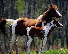 baby horses - Google Search