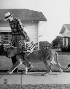 Pet Lion, Blondie, out for a walk in Graham, Texas, 1955.