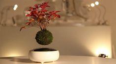 Air Bonsai Japanese invents Levitating Bonsai Trees