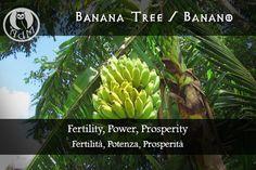 Magical Uses of Banana Tree: Fertility, Power, Prosperity  Usi Magici del Banano: Fertilità, Potenza, Prosperità || L'antro della magia http://antrodellamagia.forumfree.it/?t=56548109