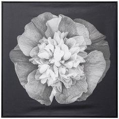 Wall Art - Night Bloom Framed Canvas