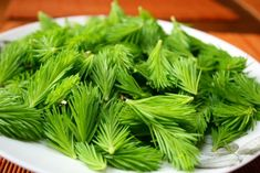 Spruce tips are exceptionally high in Vitamin C, potassium and magnesium. Learn other benefits and the ways to eat these vitamin-rich goodies. Herbal Cure, Herbal Remedies, Natural Remedies, Agriculture, Spruce Tips, Tea Benefits, Wild Edibles, Medicinal Herbs, Herbal Plants