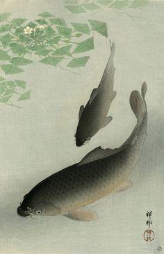 Japanese Art Print Carp Koi by Ohara Koson