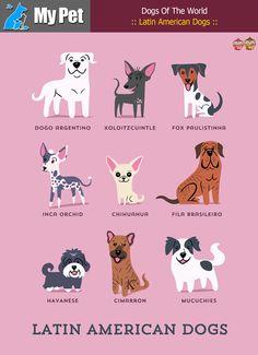:: Latin American Dogs :: From CENTRAL & SOUTH AMERICA: Dogo Argentino (Argentina), Xoloitzcuintle (Mexico), Fox Paulistinha (Brazil), Inca Orchid, (Peru), Chihuahua (Mexico), Fila Brasileiro (Brazil), Havanese (Cuba), Cimarron (Uruguay), Mucuchies (Venezuela). #MrbigninkPage #KunLhingJingleBell