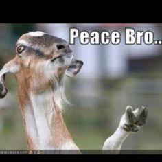Haha goat. :p