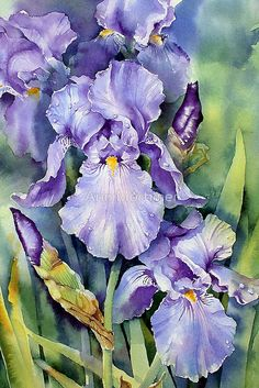 """""""Dewdrop Irises"""" - painting by Ann Mortimer, via redbubble"""