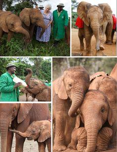 David Sheldrick Wildlife Trust Elephant Orphanage