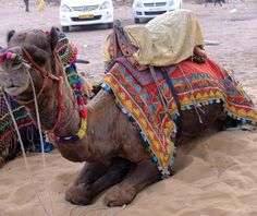 Pushkar Camel Fair Experience India's rich heritage and cultural diversity with Ekno Experience's  Golden Triangle and