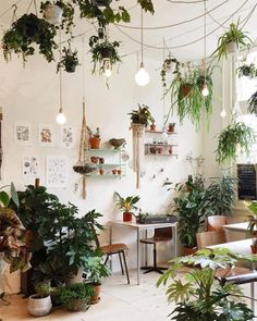 How To Pick The Perfect Houseplants For Your Space Even If You Dont Have A Green Thumb | TheNest.com