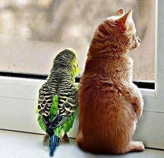 Parakeet and kitten taking in the view