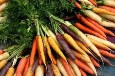Beyond Diet*s Gluten Free Weight Loss Diet and Healthy Meal Plans Red Carrot, Carrot Farm, Growing Carrots, Beyond Diet, Carrot Seeds, Eating Organic, Sous Vide, Gardening, Vegetables Garden