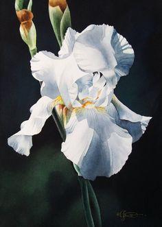 """Soft White Iris"" by Jacqueline Gnott"