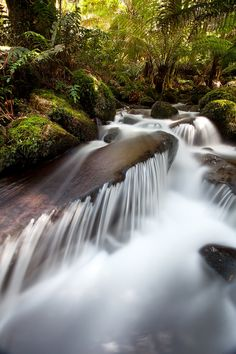 Cement Creek in the Yarra Ranges National Park, Victoria, Australia (Relaxing)