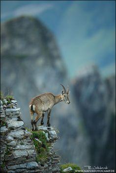 Ein Kletterkünstler - Bild & Foto von Radomir Jakubowski aus Tiere - Fotografie (31958786) | fotocommunity