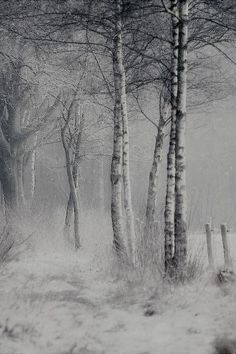 Landscaping To Sell Your House Misty Forest, Dark Forest, Outdoor Photography, Nature Photography, Nature Artwork, Winter Photos, The Draw, Art Challenge, Winter Scenes
