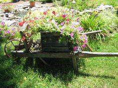 Wheelbarrow with flowers . . .