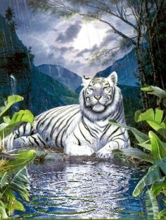white tiger Waterfall gif by Beautiful Fantasy Art, Beautiful Cats, Animals Beautiful, Animals And Pets, Baby Animals, Cute Animals, Animal Paintings, Animal Drawings, Tiger Images