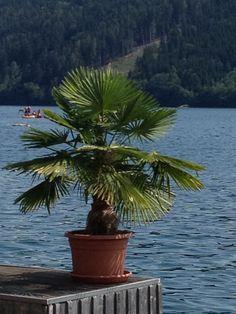 Urlaub im Seeboden - Millstättersee Plants, Boden, Vacation, Plant, Planets