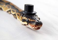 "Google ""snakes in hats"" if you're having a bad day... or if you just enjoy hating on people who dress their pets and want to see what may be the most ludicrous examples of said phenomenon."