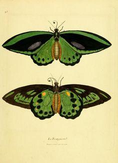 Green and black butterflies