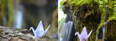 Cascada Sipote - Romania Journey, Garden, Travel, Waterfalls, Garten, Viajes, Gardens, Trips, Traveling