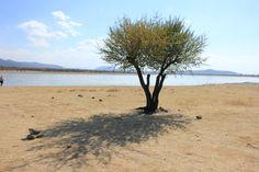 árbol y lago