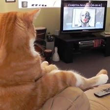 https://www.facebook.com/search/photos/?q=cat clipart