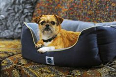 I love Jim from Mike and Molly, he's so cute! I think he's a griffon mix?