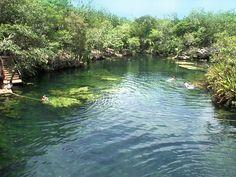 """Vive algo único en la península de Yucatán haciendo snorkel en las piscinas de agua dulce y cristalina llamadas """"cenotes"""". #UnikExperience"""