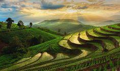 Thailand-ChiangMai-RiceFields-1024x608.jpg (1024×608)